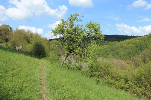 Bogenparcours Collenberg